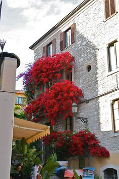 Awesome Flowers in Taormina, Sicily, Italy
