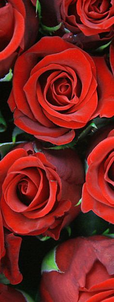 Happy Mother's Day to all the wonderful women that follow and contribute to my boards!!!! -- Red Roses for You!!!! More