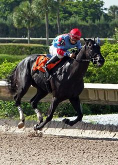 Calder: Brave Dave much the best in Birdonthewire Horse Racing, Brave, Good Things, Horses, Animals, Animales, Animaux, Horse, Words