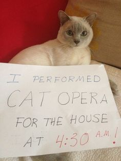 """I performed cat opera for the house at 4:30 AM.""   My cat Angel does this every morning..."