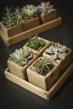 Set of Wooden Cup Planters in Wooden Tray.