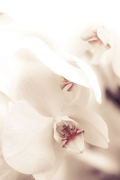 Exquisite detail of orchid
