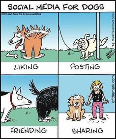 Dog Quotes Love, Dog Quotes Funny, Funny Dogs, Humor Quotes, Funny Memes, Random Quotes, Fox Terriers, Socializing Dogs, Dog Comics