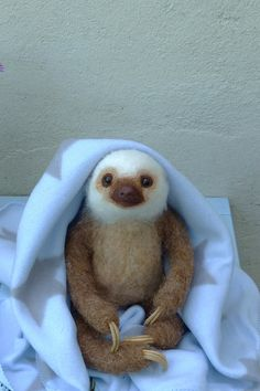 Needle felted Life size two-toed Sloth baby boy Who doesn't want a ba. - Needle felted Life size two-toed Sloth baby boy Who doesn't want a baby Sloth ? Needle Felted Animals, Felt Animals, Cute Baby Animals, Needle Felting, Animals And Pets, Funny Animals, So Cute Baby, Cute Babies, Cute Baby Sloths