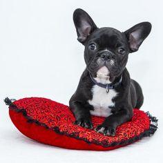 É importante socializar o cachorro desde filhote para isso não acontecer! #cachorro #cães #animais #pets #dogs