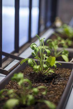 terredepastelblog : Comment cultiver le pastel chez soi ?