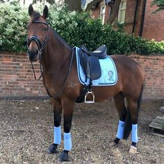 HV POLO air blue set modelled by Fig of 'Diamonds in the Rough' Dressage