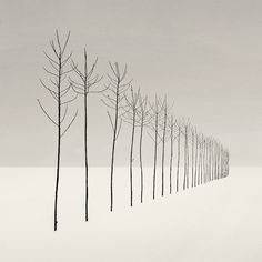Nilgün Kara--nice change of pace for perspective drawings Perspective Drawing, Point Perspective, Illustration Art, Illustrations, Minimalist Photography, Art Plastique, Teaching Art, Tree Art, Black And White Photography