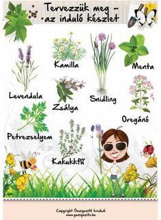 Herb Garden, Vegetable Garden, Garden Plants, Back Gardens, Outdoor Gardens, Back Garden Landscaping, Garden Journal, Earth Day, Garden Planning