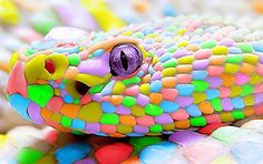 Candy Snake by ~kenzeec on deviantART