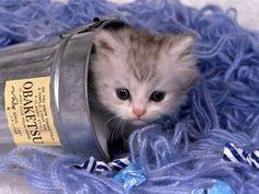 chaton mignon - Recherche Google