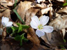 Tavasz a Bükkben - Maria Klucs - Picasa Webalbumok