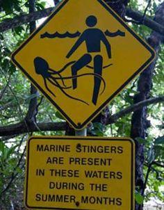 Vietato calpestare calamari gianti?