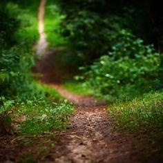 Prøv fx en gåtur på en af mange stier i Assens Kommune. Naturen er lige her #visitdenmark #visitfyn #fyn #nature #nature_perfection #naturelovers #mothernature #natur #denmark #danmark #dänemark #landscape #assensnatur #assens #mitassens #vildmedfyn #fynerfin #vielskernaturen #visitassens #instapic #picoftheday #nofilter #summer2016 #sommer #igdenmark