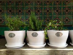Macetas para hierbas de olor en barro esmaltado a alta temperatura
