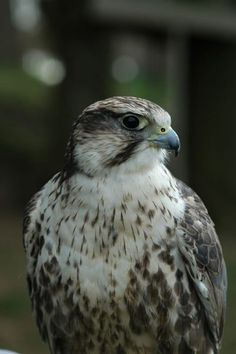 Falke http://fc-foto.de/482241