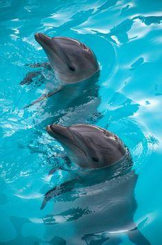[Dolphins] via Omar Andrade Jimenez - Delfines Cancun Underwater Animals, Underwater Creatures, Ocean Creatures, Dolphin Photos, Dolphin Art, Cute Baby Animals, Animals And Pets, Funny Animals, Strange Animals