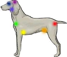 Yay!!! Dog Chakras for Reiki healing: everything & every being is made up of energy. Reiki helps us all
