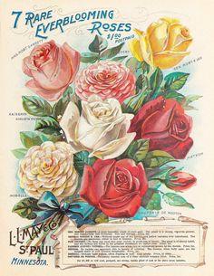 Vintage Diy, Vintage Labels, Vintage Flowers, Vintage Images, Vintage Floral, Printable Vintage, Vintage Cards, Decoupage Vintage, Vintage Ephemera