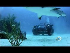 Coolest Shark Week Wheels: The VW convertible shark cage beetle Shark Week, Vw Beetle Convertible, Shark Cage, Cool Sharks, Diver Down, Underwater World, Get Outside, Marine Life, Scuba Diving