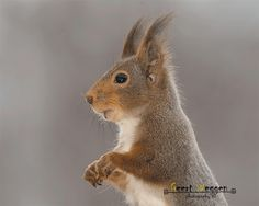 Squirrels are soooo annoying. This one seems to be somewhat cute!!  :  )