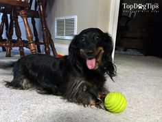 Durable Dog Toys That Will Outlast Your Puppy's Jaws - Top Dog Tips