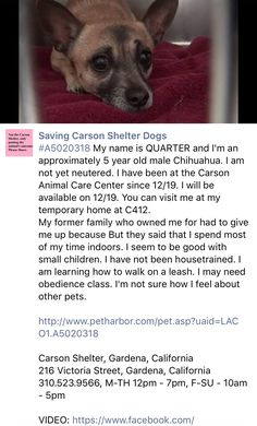 12/29/16 PLEASE SHARE QUARTER!! SURRENDERED JUST BEFORE CHRISTMAS! TERRIFIED WITHOUT HIS MOM!! /ij🐾🐾 https://m.facebook.com/savingcarsonshelterdogs/photos/a.172032662969376.1073741830.171850219654287/703099236529380/?type=3&theater