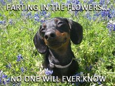 They'll never know! I'm just farting in the flowers! - Laughed to the point of tears.