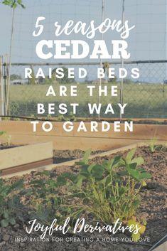 Three cedar raised b