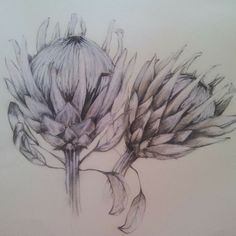 Small Pink Ice Proteas all in a row. Charcoal on paper Work in progress Chacoal on paper Charcoal on paper. Botanical Drawings, Botanical Art, Animal Drawings, Art Drawings, Pencil Drawings, Protea Art, South African Artists, Picture Cards, Doodle Art