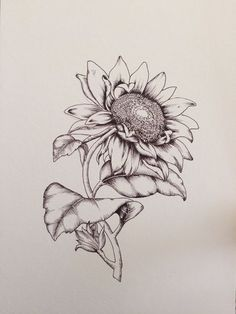 Floral flower drawing black and white illustration pinterest sunflower botanical illustration print print of a hand drawn illustration a5 148 x 210 mm mightylinksfo