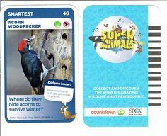 46 Acorn Woodpecker