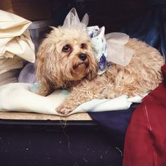 Fashion's Most Stylish Dogs Model Their Owner's Designer Duds