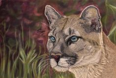 Pastel Puma by Sarahharas07 on deviantART