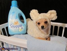 Snuggle Bear - 2013 Halloween Costume Contest via @costumeworks. Syri in another costume contest!
