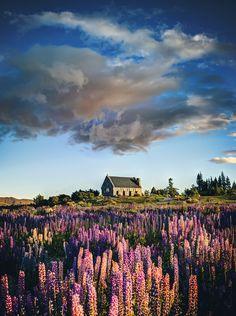 The lupins under wormhole clouds near the Church of the Good Shepherd, Tekapo, New Zealand