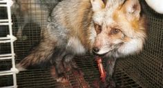 Petition · Gap Inc. is selling kangaroo, fox, rabbit, raccoon dog, and mink fur! · Change.org