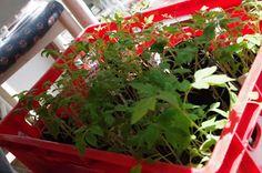 mr greens welt l cken m ssen gef llt werden exotische pflanzen tropische und heimische. Black Bedroom Furniture Sets. Home Design Ideas
