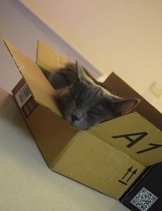 She just loves boxes #Cute