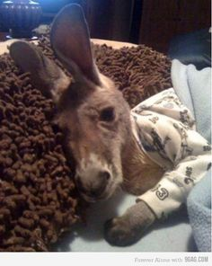 Oh, that's just a baby kangaroo in pajamas...Too cute!!!