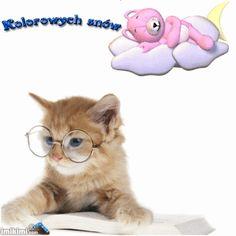 Wierszyki i gify na dobranoc: Gify na dobranoc kotki Lauren Wood, Good Night Sweet Dreams, Cute Cats, Teddy Bear, Animals, Unicorn, Friends, Blog, Dog Love