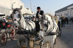 #Fieracavalli 2012 racconta live con pin, tweet e post ;) #fieracavalli #whyilovehorses #cavalli #horse #horses #veronafiere #verona