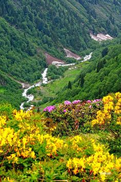 Artvin - Eastern Blacksea Region of Turkey #doğukaradeniz #artvin #travel  #nature