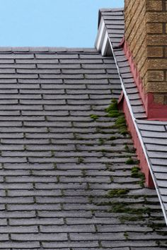 Remove moss from roof zinc strip