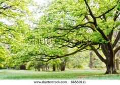 Tree background free stock photos download (17,086 files) for commercial use…