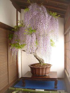 Bonsai fa | Fotó: boredpanda.com