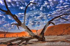 Photo about Dead tree in Dead Vlei - Sossusvlei, Namib Desert, Namibia. Image of remains, close, namibia - 25559659 Namib Desert, Royalty, Painting, Image, Art, Royals, Art Background, Painting Art, Kunst