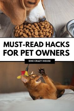 Do you have a cat? Check out these awesome pet hacks! From using baking soda to get rid of cat urine smell to litter box tips and tricks!