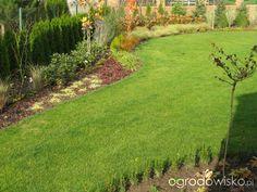 Zielonej ogrodniczki marzenie o zielonym ogrodzie - strona 609 - Forum ogrodnicze - Ogrodowisko