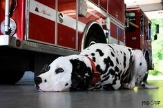 FireDog... taking a well-deserved break :)